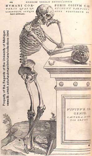 Historia: Anatomía comparada (2 de 2)